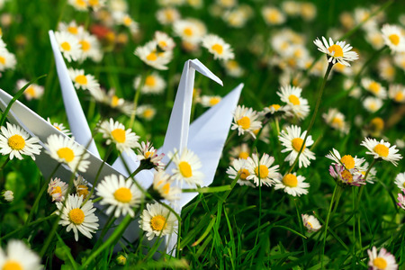 White paper bird and daisies
