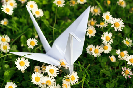 paper folding: White paper bird and Daisies