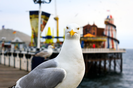 seagull: A seagull at Brighton, UK. Shallow depth of field. Focus on the eyes.