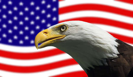 Bald Eagle in guarding American Flag Stock Photo - 1193560