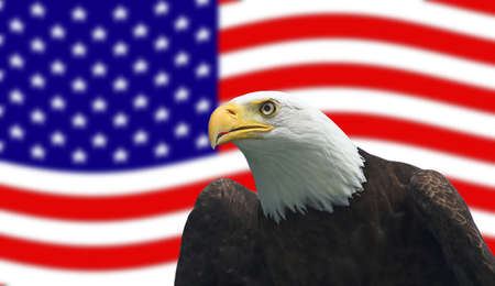 Bald Eagle in front of American Flag Stock Photo - 1193556