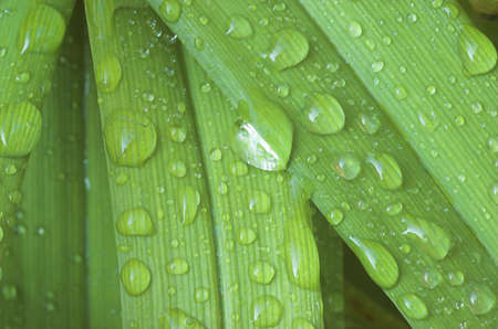 Close up view of water drop on a blades of grass Stock Photo - 1282948
