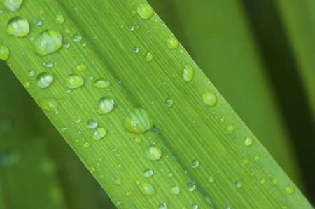 Dew drops on a blade of grass Stock Photo - 1282952