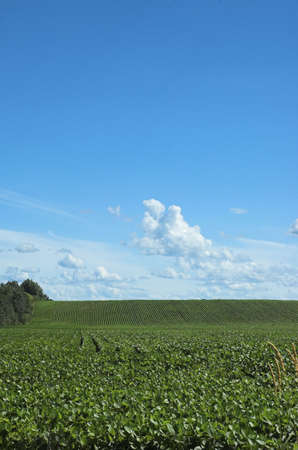 early summer: Portrait view of farm field in early summer
