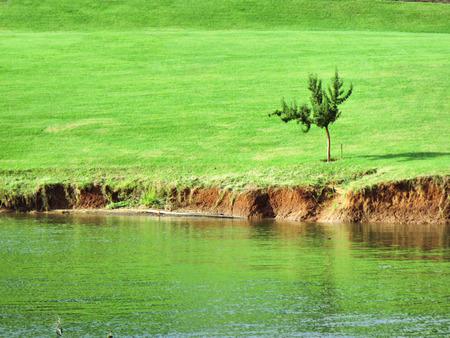 africa jungle: Little tree on lawn next to lake. Shot in Albert Falls Dam Nature Reserve, Kwazulu-Natal, South Africa