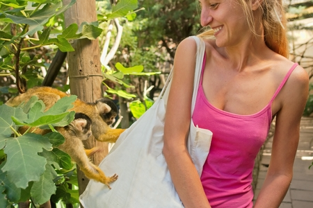 pigmy: Two cute little monkeys (pigmy marmosets) inspect girls bag. Shot in Cape Town, South Africa.