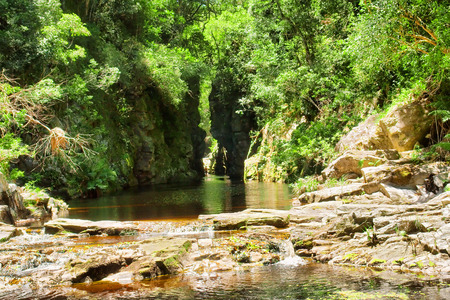 africa jungle: Green canyon with tea-water river. Shot on the Otter trail in the Tsitsikamma National Park, Garden Route area, Western Cape, South Africa. Stock Photo