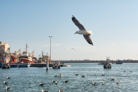 south coast: Seagulls in morning port. Shot in Lamberts Bay, Western Cape, South Africa.