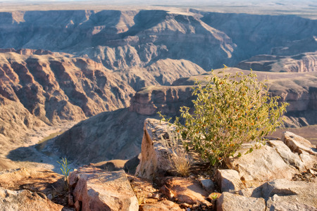 south park: Small desert plan against canyon. Shot in Fish River Canyon National Park, Namibia. Stock Photo