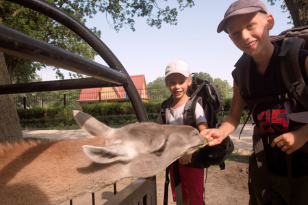 zoo youth: Happy children feed lama - soft focus on girl. Shot in Askania-Nova, Kherson Region, Ukraine. Stock Photo