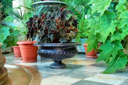 alupka: Vases on terrace. Shot in Vorontsov Dvorets, Alupka, Crimea, Ukraine.