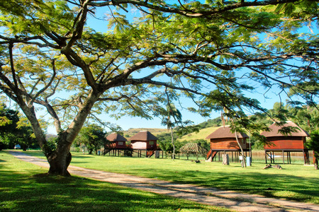 kwazulu natal: Tree and environment-friendly cottages next to river. Shot in Port Edward, Kwazulu-Natal, South Africa.