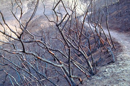 devastated: A local mountain fire devastated this popular hiking trail in California, USA.