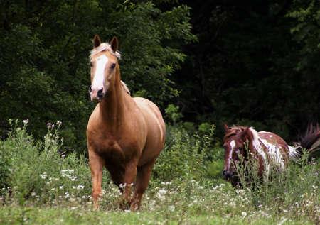 Galloping Horses photo
