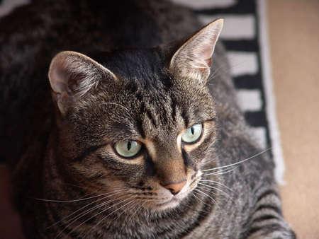 Cat portrait Stock Photo
