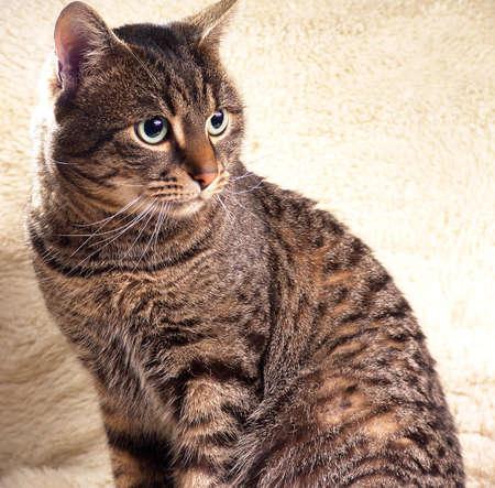model cat portrait
