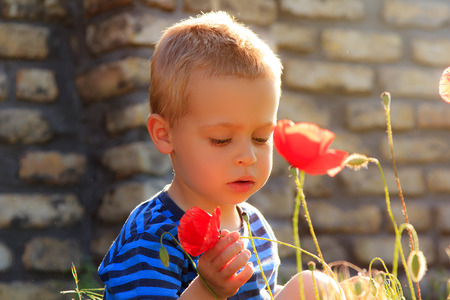 Little boy examining poppies in front of stone wall background. Stock Photo