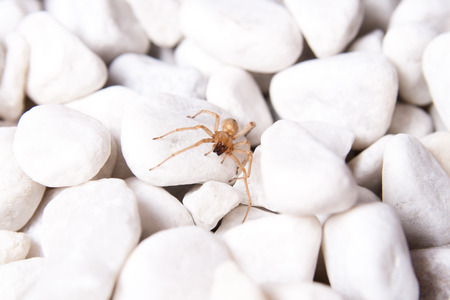 White stone on the beach with brown spider