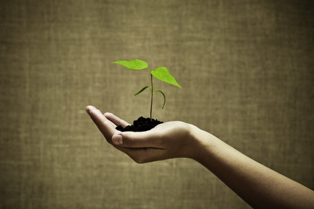 Female hand holding a new green life