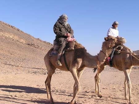 dromedaries: EGYPT, Sahara - March 12: Scene desert of a grandfather tourist, youman and camels in Sahara desert, Egypt Africa. March 12, 2005