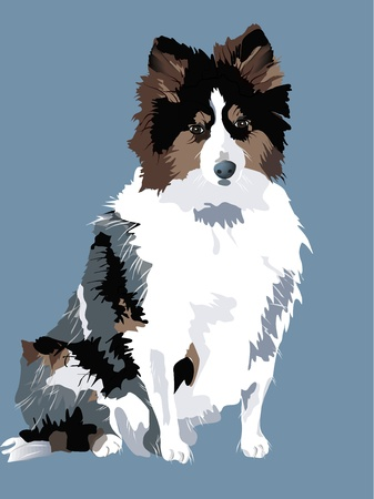 a beautiful sheepdog Vector