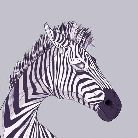 Zebra head,  drawing with brush strokes and transparencies Vector