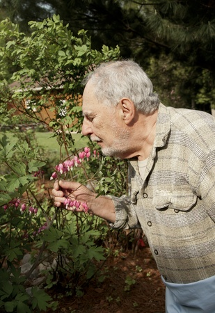 senior gardener looking and smelling his flowers Stock Photo