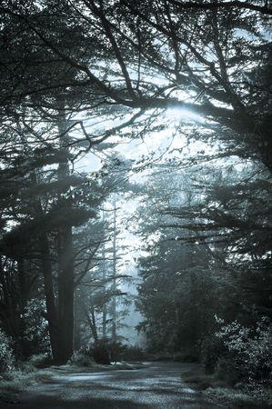 underbrush: California s morning glory undergrowth  in blue , USA