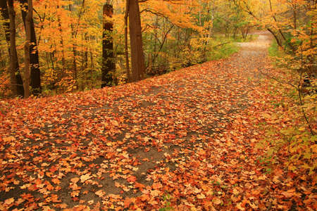 A country path is a blaze of color on a quiet Autumns day.