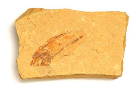 Fossil fish in sandstone, Devonian Period. Stock Photo