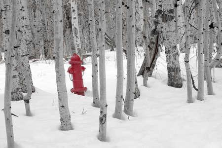 borne fontaine: Une bouche d'incendie rouge vif debout dans la neige entre un bosquet d'arbres st�riles tremble