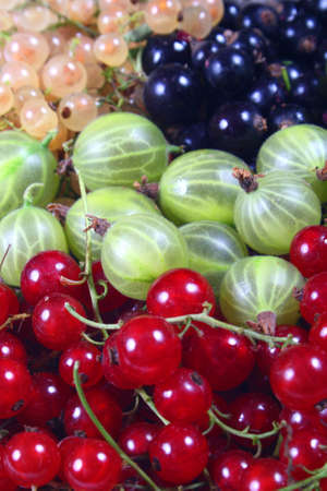 black currants: Fresh red, white, black currants and gooseberry