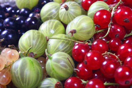 Fresh red, white, black currants and gooseberry photo