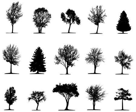 plats: Trees (vector)