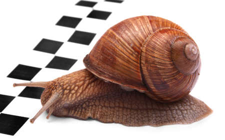 pursue: Snails racing