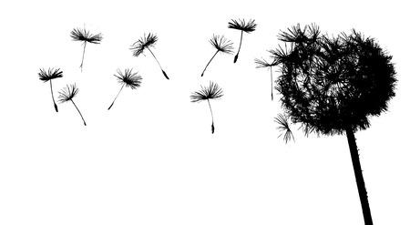 dandelion in the wind Stock Vector - 3842363