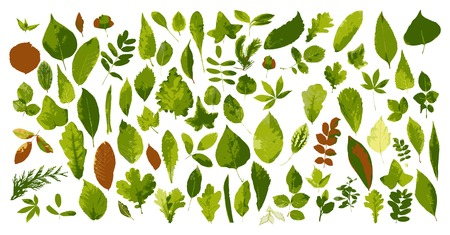 The big collection of leaves Vector