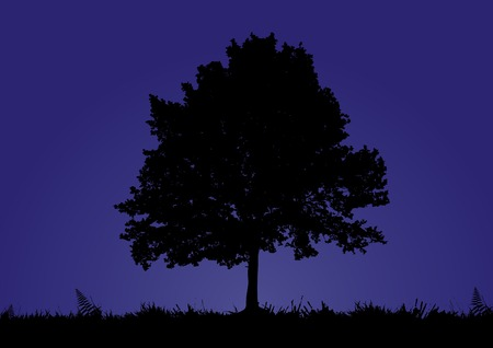 A solitary tree stands in a night background Stock Vector - 3906271