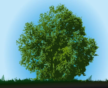 Tree on blue sky in summer day Vector