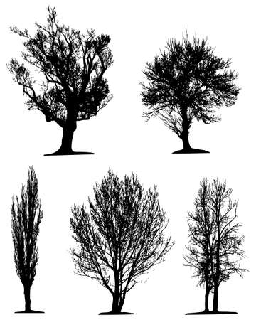 plats: Black tree silhouettes on white background. Vector illustration.