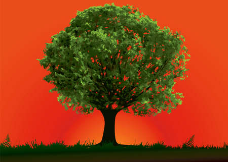 Tree and red sunset in summer day Vector
