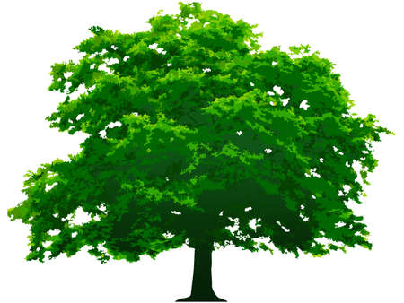 image size: Vector tree. This image is a vector illustration and can be scaled to any size without loss of resolution