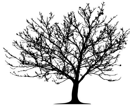 Vector tree. This image is a vector illustration and can be scaled to any size without loss of resolution Vector