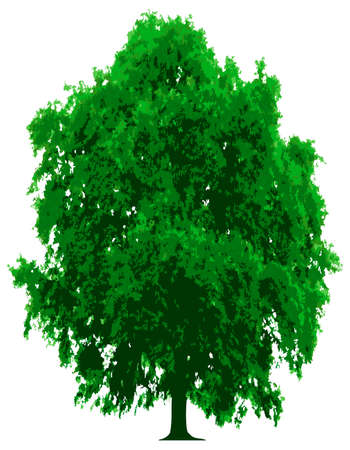 scaled: Tree - This image is a vector illustration and can be scaled to any size without loss of resolution