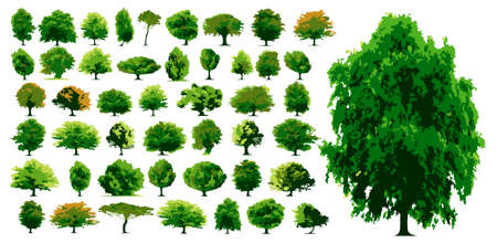 Vector trees - This image is a vector illustration and can be scaled to any size without loss of resolution Ilustrace