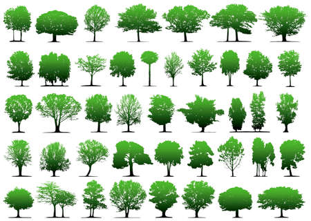 image size: Vector trees - This image is a vector illustration and can be scaled to any size without loss of resolution Illustration