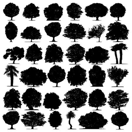 Trees vector on white background Stock Vector - 5578229