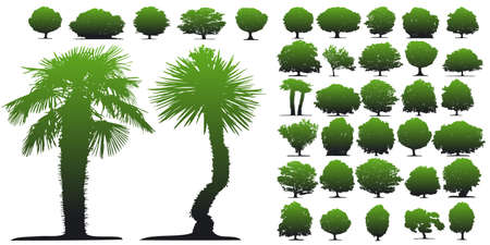 Trees on white background. This image is a vector illustration Stock Vector - 5966957