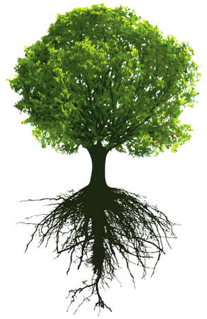 single tree: Trees with roots. This image is illustration and can be scaled to any size without loss of resolution. Illustration