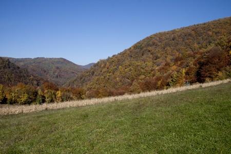 Vista del paesaggio in Croatia(Zagorje), bosco in autunno